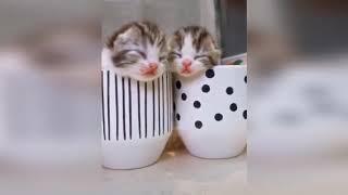 Смешные приколы про котов до слез под музыку – Смешные кошки  2018 – Funny Cats
