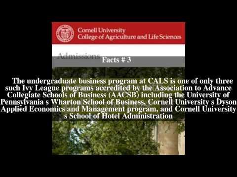 Cornell University Common Application Essay Questions