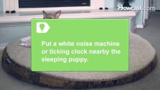 How To Get Puppies To Sleep
