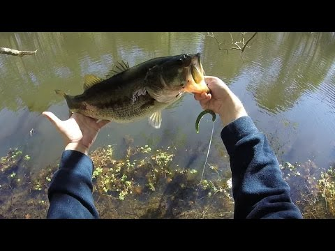 Catching the unofficial lake record bass from the bank in Houston Texas