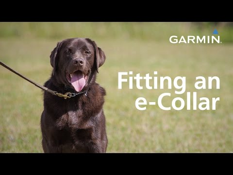 garmin:-fitting-an-e-collar-and-finding-your-dog's-level