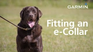 Garmin: Fitting an e-Collar and Finding Your Dog's Level