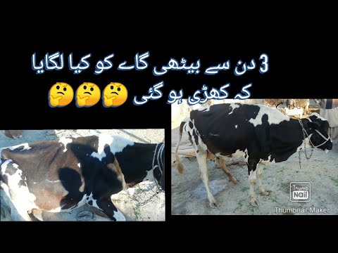 Vitamin Mineral Deficiency in cow treatment.