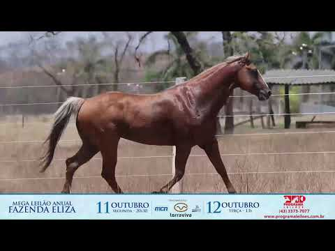 lote 1000 - RED LIDER G2