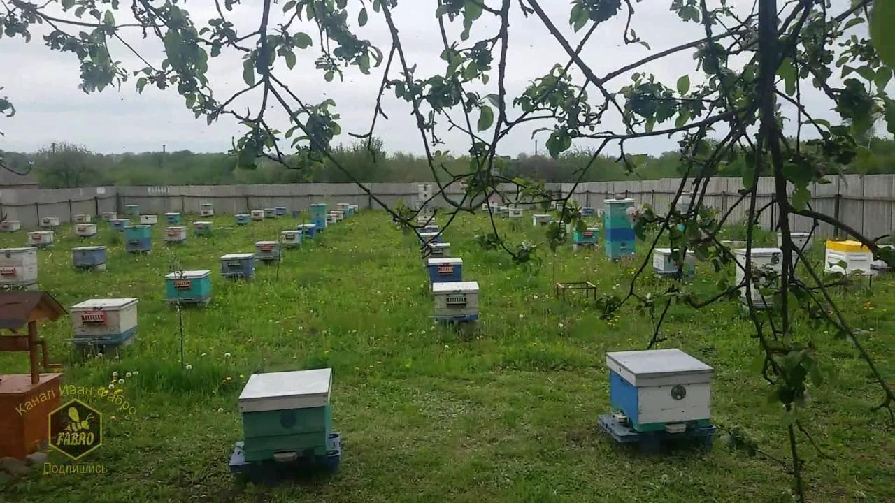 Привой для пчел на пасеке