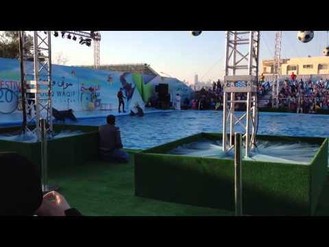 Qatar spring festival dolphin show 2013