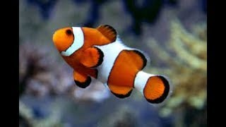 Рыбы. Общая характеристика. Биология 7 класс