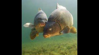 Тесто для рыбалки на течении