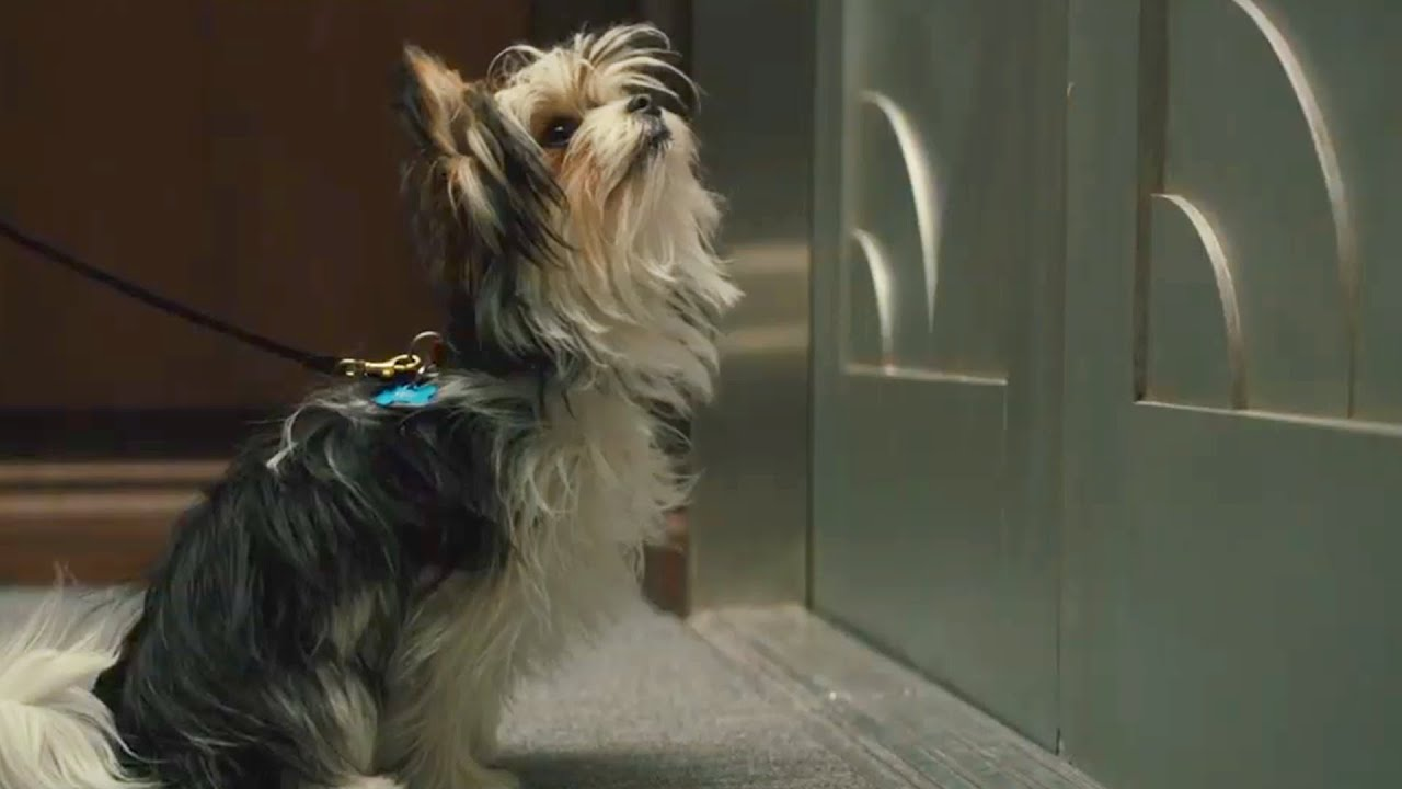 A Dog S Journey Max Leads Cj To Trent Film Clip Own It Now On Blu Ray Dvd Digital Youtube