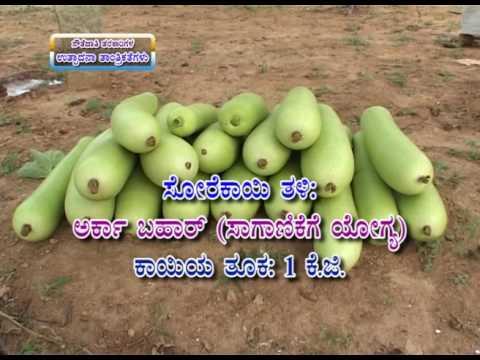 08 12 2016 production techniques in cucurbitaceous vegetables