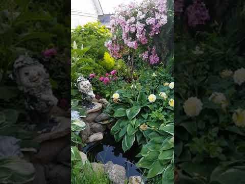 видео: Летний розовый сад
