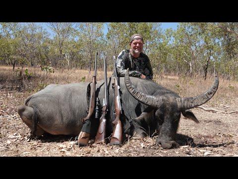 Water Buffalo, Hunting Australia 4K