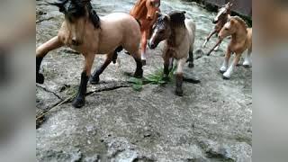 Клип про коней из фото