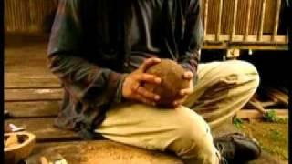 Взаимоотношения грызуна агути и бразильского ореха.wmv