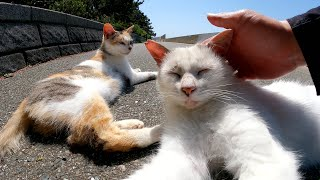 まろ猫が可愛い声で鳴くと、黒猫と三毛猫がやって来て仲良く日向ぼっこをはじめた