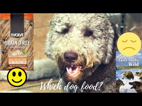Bad batch of Taste of The Wild?  Evolve grain free food| Goldendoodle dog food ordeals!