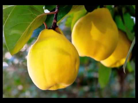 quince fruit fruits for a healthy skin