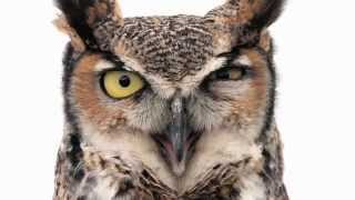 Sight - Imagine What Animals See (Bees, Chameleons, Owls and more!)