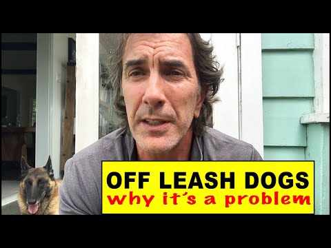 OFF LEASH DOGS - Why It's Such a Danger - Dog Training Video - Robert Cabral