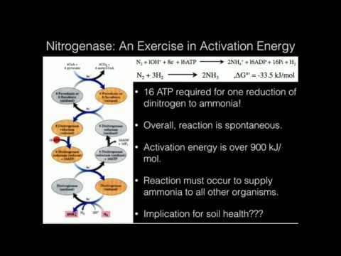 The Nitrogen Cycle and Nitrogenase