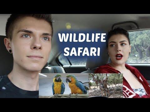 Wildlife Safari w/ Taylor Nicole Dean
