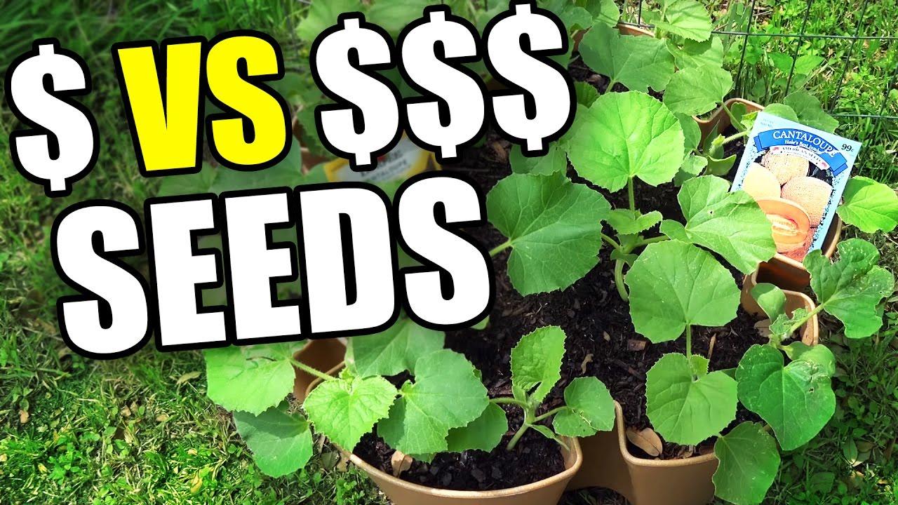 Garden seeds cheap vs expensive follow up epicreviewguys cc youtube garden seeds cheap vs expensive follow up epicreviewguys cc izmirmasajfo