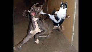 😁 Funniest 🐶 Dogs and 😻 Cats   Awesome and Funniest Animals Life Video 2019