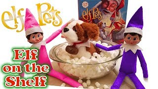 Purple & Pink Elf on the Shelf - Saint Bernard Pet Dog Bath! Day 5