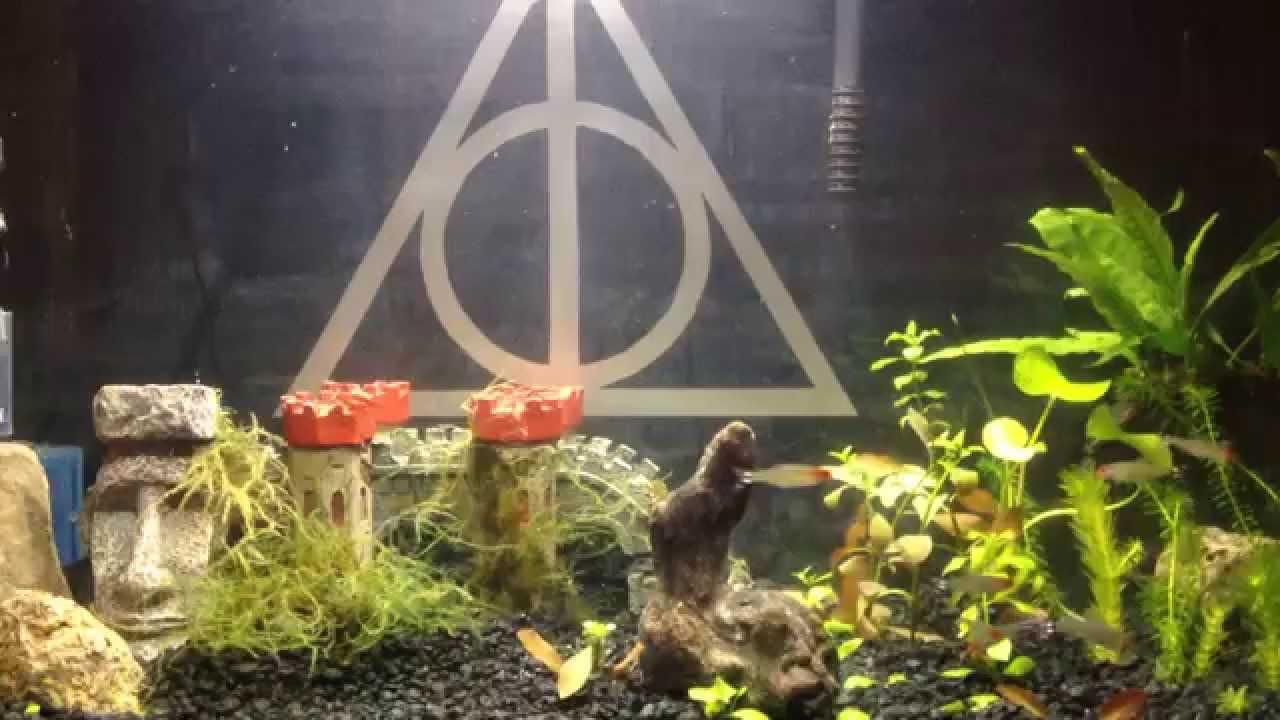 Harry Potter Aquarium You