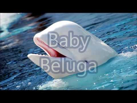 BABY BELUGA - Cover of the song Baby Beluga with lyrics.