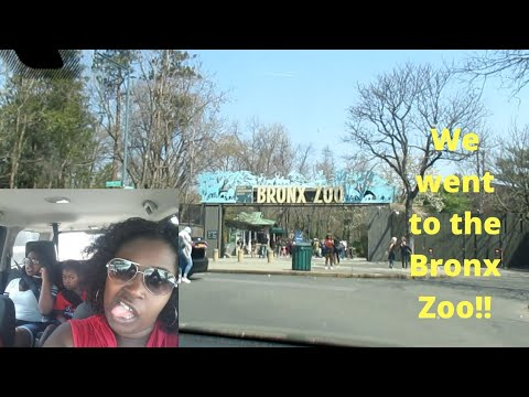 Applebees and the Bronx Zoo