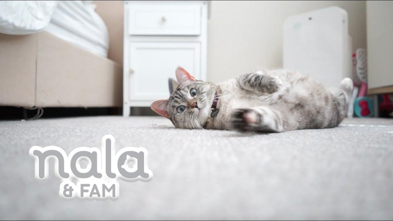 Hawaiian Cat Names