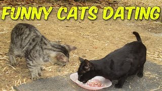 The Cat's Behavior When Falling In Love  | Funny Cats Dating