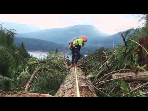 New Faller Training - BC Forest Safety Council