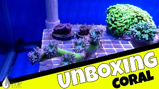 Unboxing $1,500 in Coral for the Frag Tank