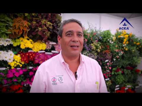 VIDEO TESTIMONIOS ACEA 2016