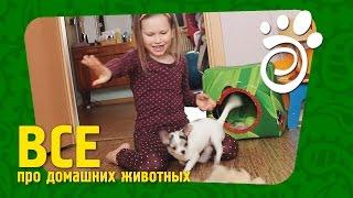 Дети и Собака. Все О Домашних Животных