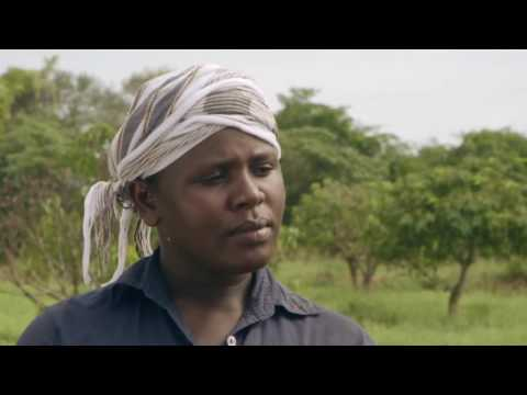 Shamba Shape Up Sn 06 - Ep 5 Cassava, Mango, Pest control (Swahili)
