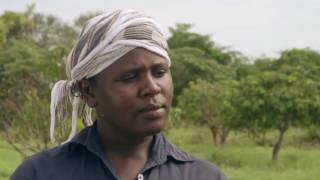 Shamba Shape Up Sn 06 - Ep 5 Cassava, Mango, Pest control (Swahili)