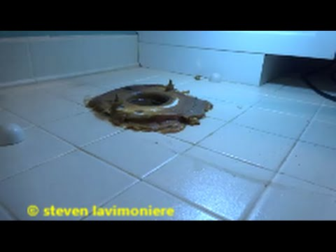 toilet water leaking through floor