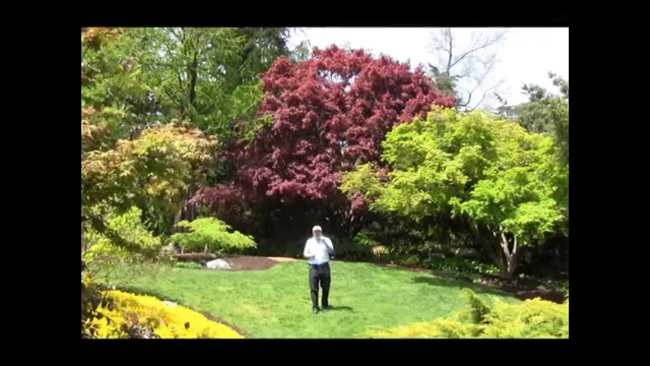 Garden Trees Best Trees For Small Garden Spaces Japanese Maples