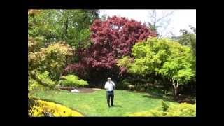 Best Trees for Small Garden Spaces - Japanese Maples