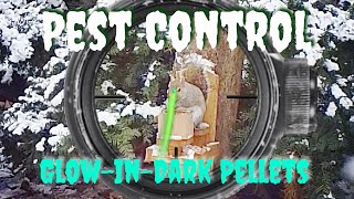 Pest Control with Airgun Tracer Pellets - EDgun Leshiy and ATN X Sight 4K Pro