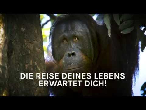 Gewinne eine spektakuläre Reise nach Borneo   BOS   orangutan.de