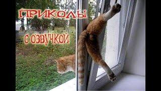 Приколы с котами с ОЗВУЧКОЙ!  СМЕШНЫЕ КОТЫ и КОШКИ – МУРЗИК