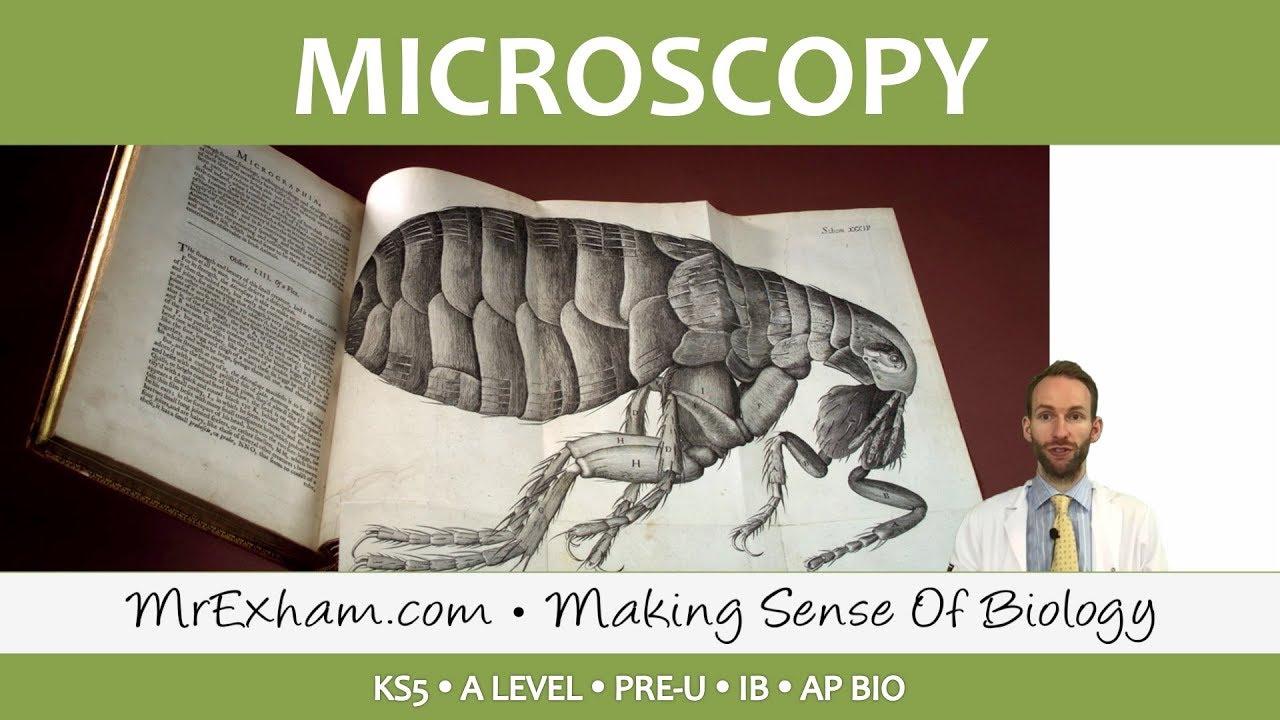 Eukaryotic Cell Structure - Microscopy - Post 16 Biology (A Level, Pre-U,  IB, AP Bio)