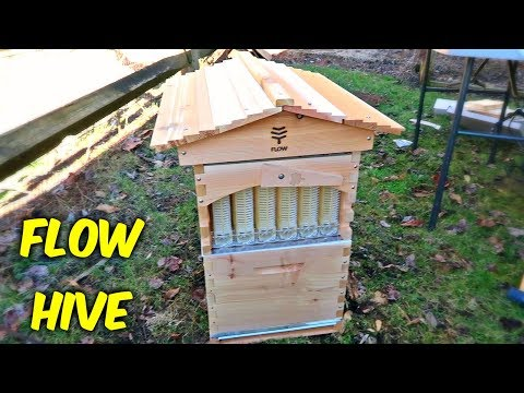 Flow Hive Review