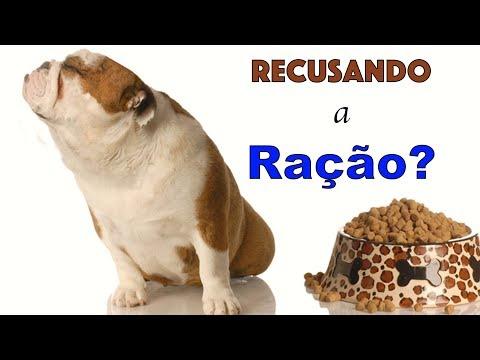 5 motivos para seu cachorro não querer comer ração