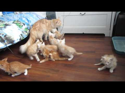 Watch These Kittens Magically Disappear When They Find Out Mom Can't Jump
