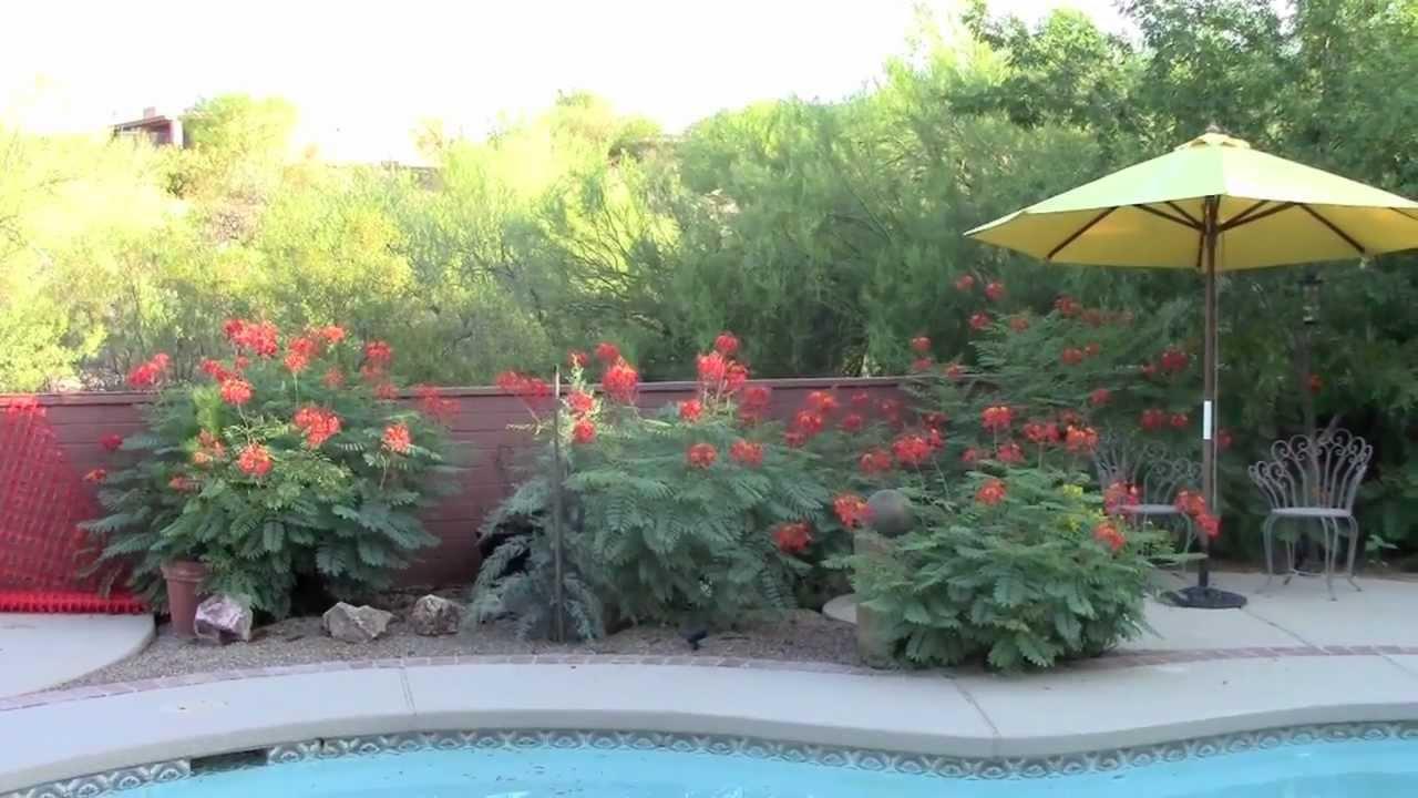 Tucson backyard makeover to zen-like Japanese garden - YouTube